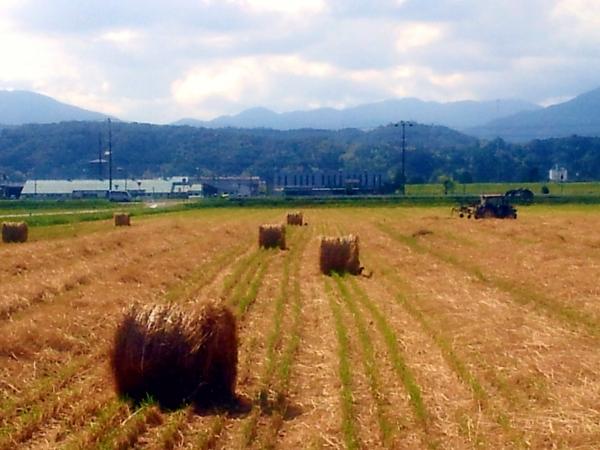 大きな牧草ロール